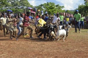 Preparations In High Gear For Minard Livestock And Beef Festival