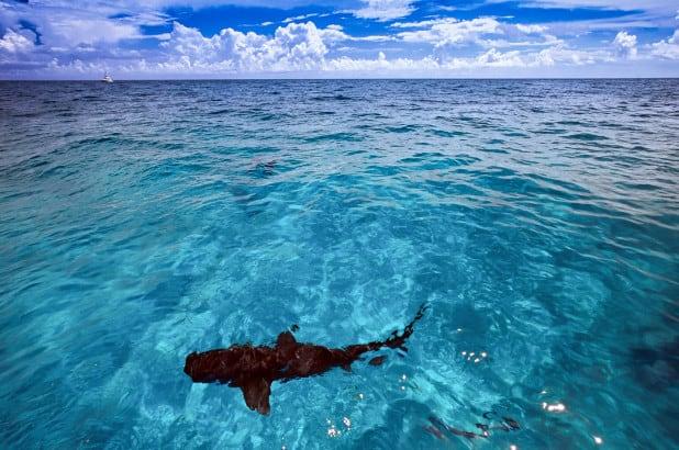 Shark attack kills woman vacationing in the Bahamas